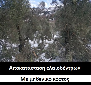 Αποκατασταση ελαιοδεντρων
